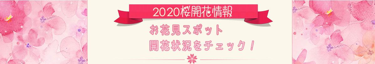 桜開花情報2016