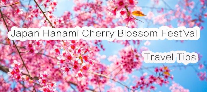 Hanami Sakura Cherry Blossom Festival Travel Tips