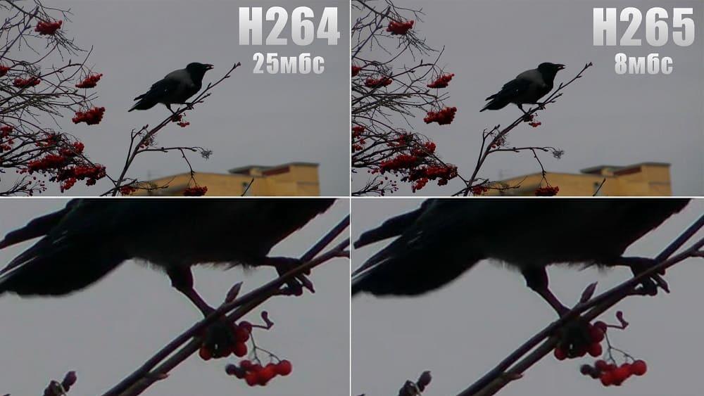 Come usare il codec h. 264 su sony vegas pro (download) 1080p60.